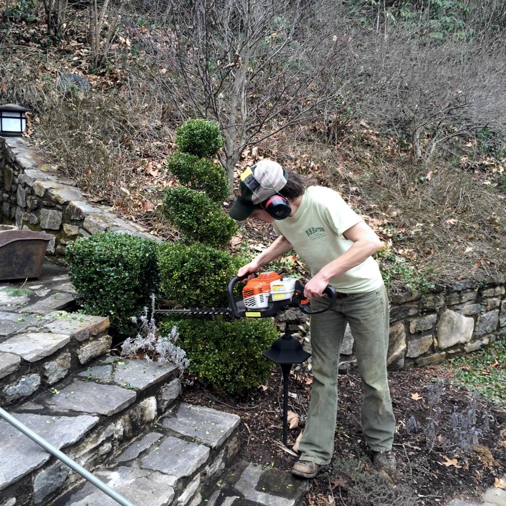 Topiary Shearing