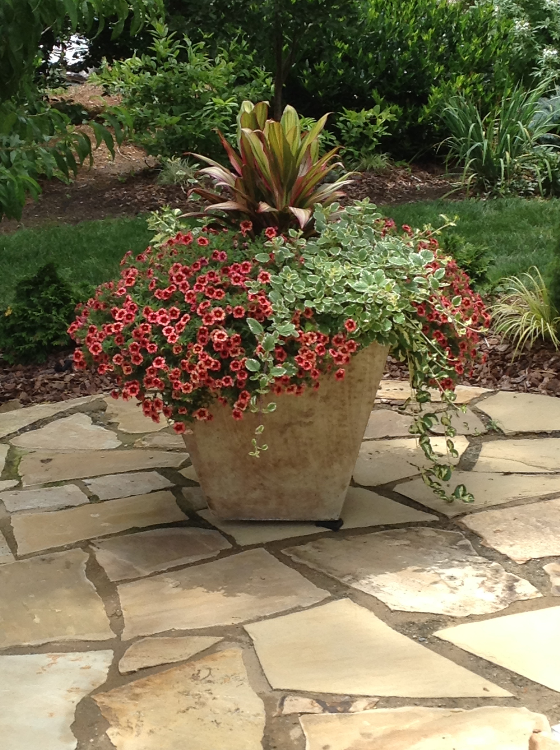 Containers are the best place to mix it up. This planting uses tropicals and annuals for all summer color. (Barney Bryant garden, South Asheville.) Million bells, Swedish ivy and dracena.