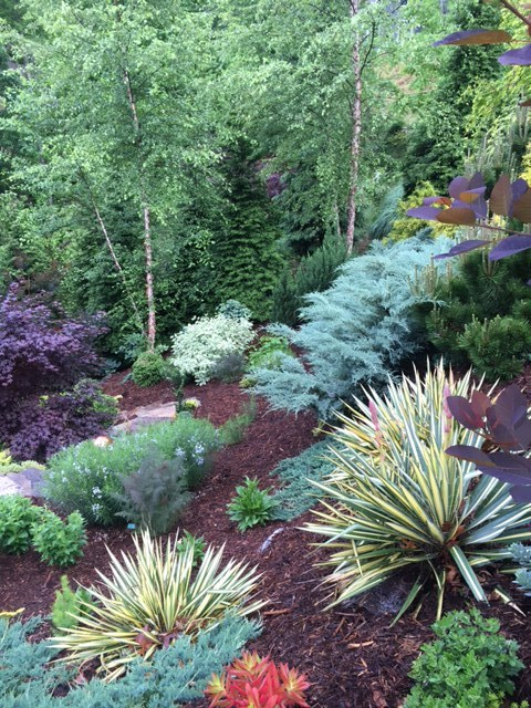 A great way to plant a steep bank is to incorporate it into the landscape. The colorful 'Bright Edge' yucca provides texture against the evergreens, blending with the blues of the 'Grey Owl' juniper, 'Golden Mop' chamaecyparis and Juniperus procumbens 'Nana'. (Picture provided by Nancy Martemucci, garden owner and BB Barns customer.)