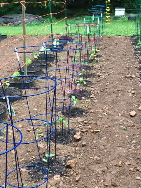 A row of colorful cages for peppers.
