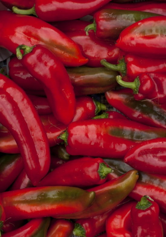 Peppers are more flavorful when they mature on the vine, but you risk having less, as they produce more when picked.