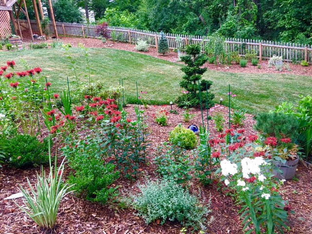 The hinoki false cypress is one of the specimen plants that stands as a focal point for the garden, adding evergreen, texture and structure to the garden.