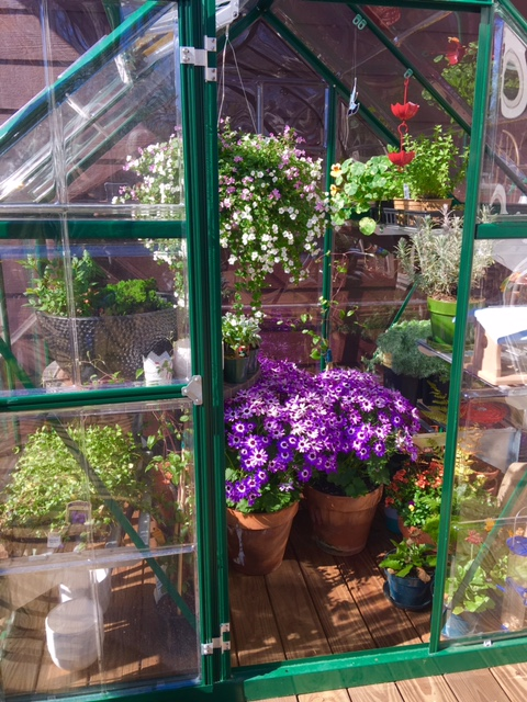 The greenhouse on the back deck helps keep herbs alive in winter, and acts as a holding place for plants waiting to get transplanted into the garden.