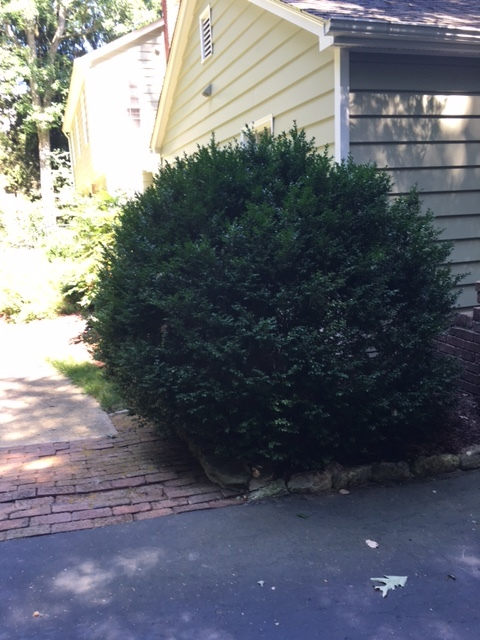 Boxwoods, a Southern classic, mark the entrance to the front garden.