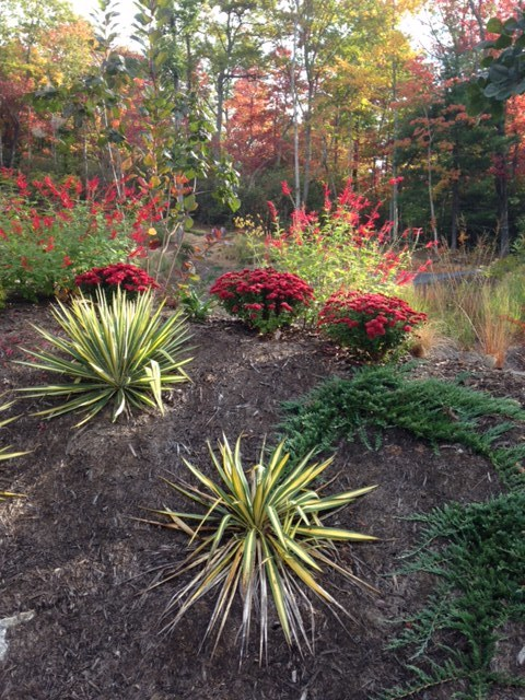 Yucca 'Bright Edge' 'Red Penny' mum, and pineapple sage.
