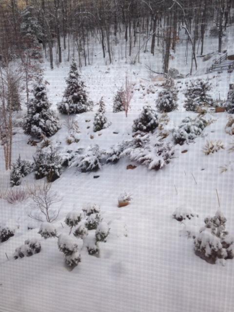 The garden under a blanket of snow.