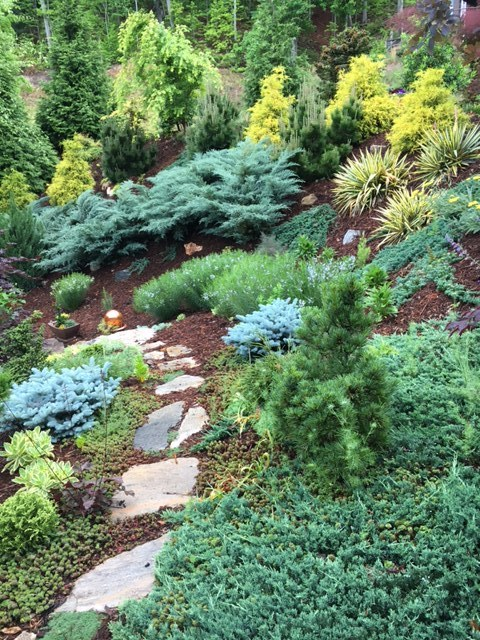 This steep hillside is Nancy's front yard. She used evergreens to set the bones of the garden and add winter color.The 'Grey Owl' juniper was the first to go in and then the gold mops, thunderhead pine, dwarf blue spruce, yuccas, and ground hugging 'Wiltonii' juniper, which turns a purplish color in winter. Seen from the house, this bank is spectacular not only in winter, but all year long.