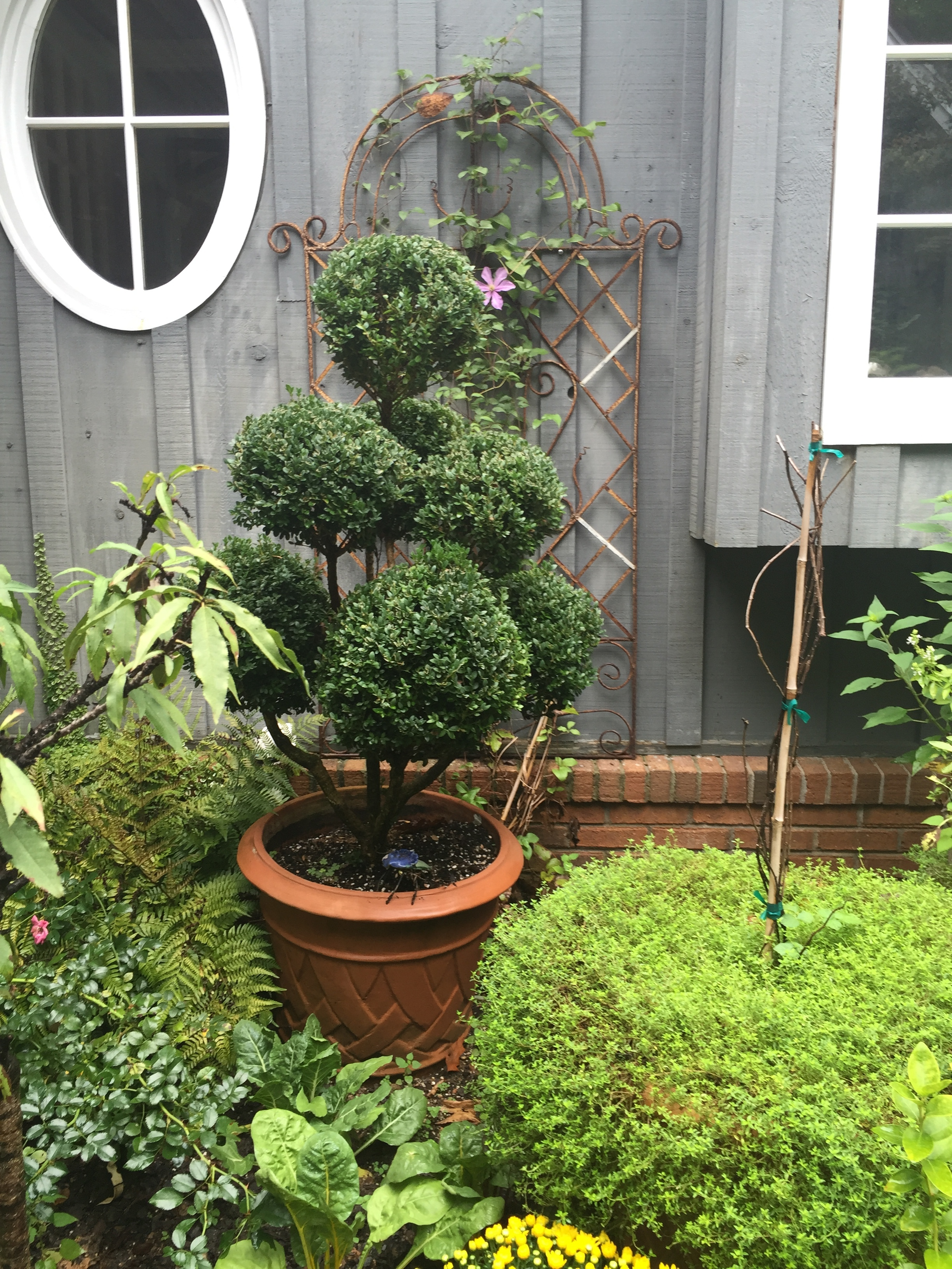 Topiary boxwood. Perfect for this spot.