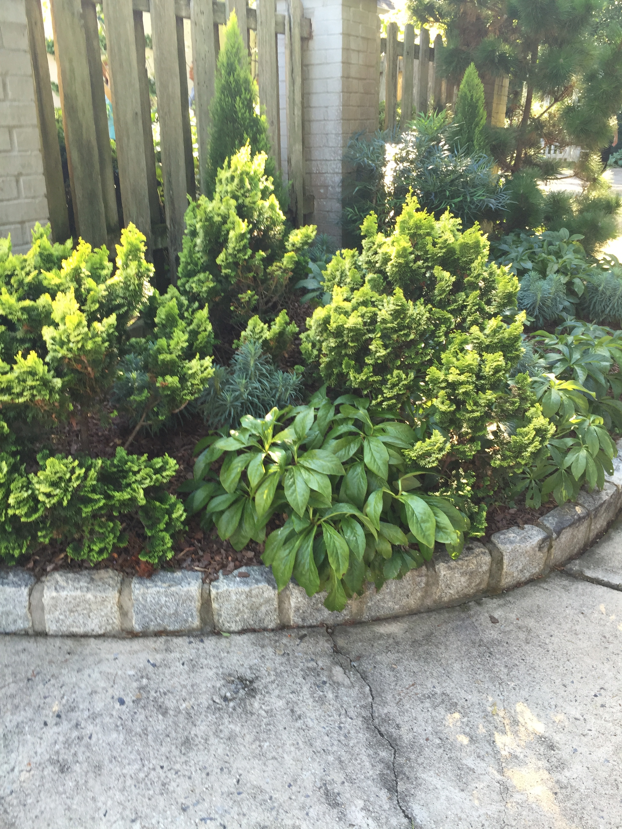 Conifers are used a lot in shade to avoid sun scorch and too much heat.