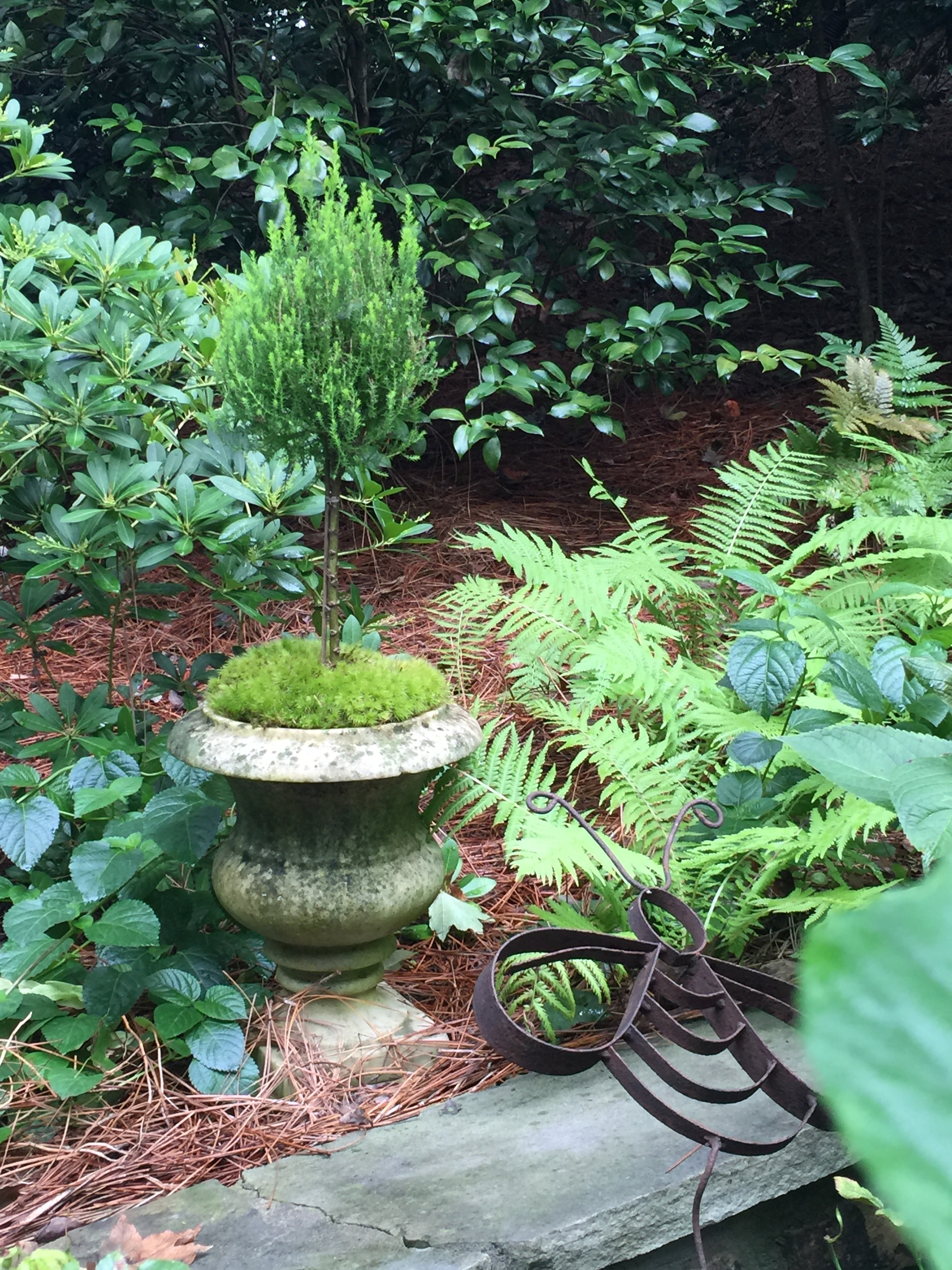 Shade gardens are very popular in hot Atlanta.