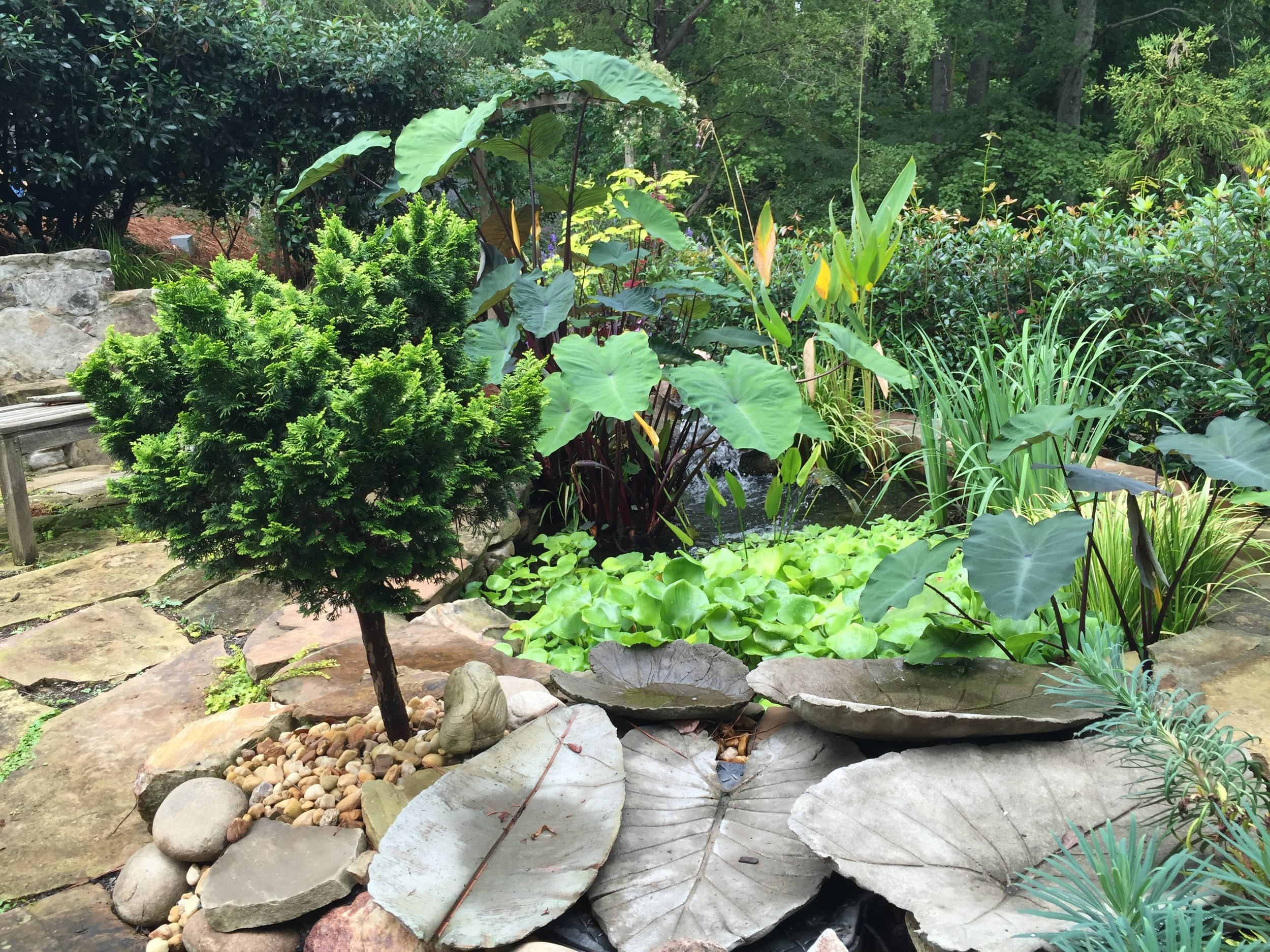 Water features, conifers and anything with big leaves were in every garden.