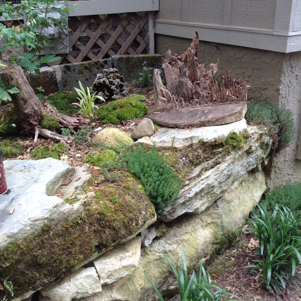 """One of the highlights of the Webb garden are all the """"surprises"""". This moss garden tucked into a corner behind the garage is one of them."""