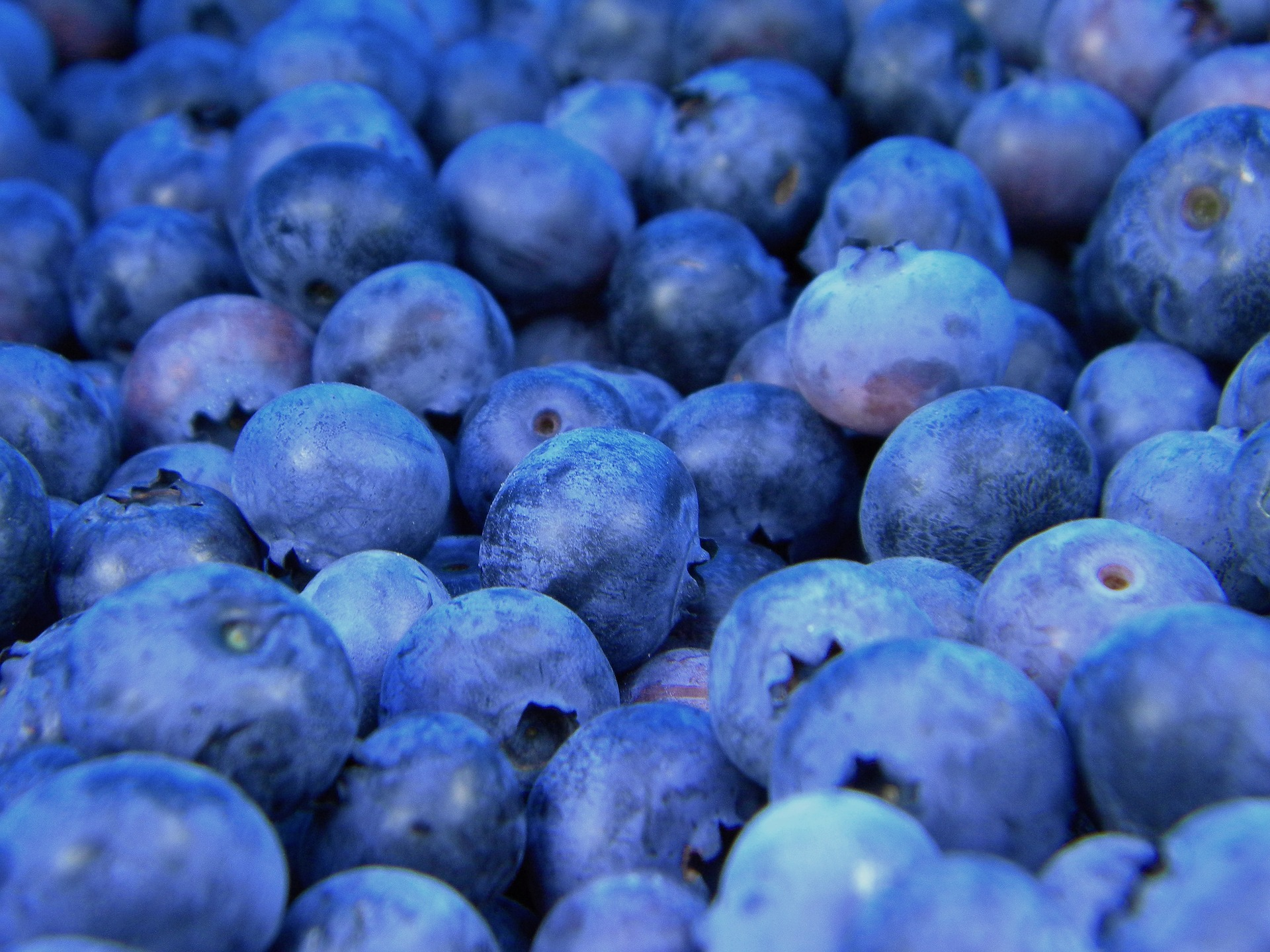 When picking your blueberry, pick the right type for your zone, but also pick one that makes your taste buds happy. Prefer sweet? Go with 'Blueray'. Like slighty tart? Try 'Chippewa.'