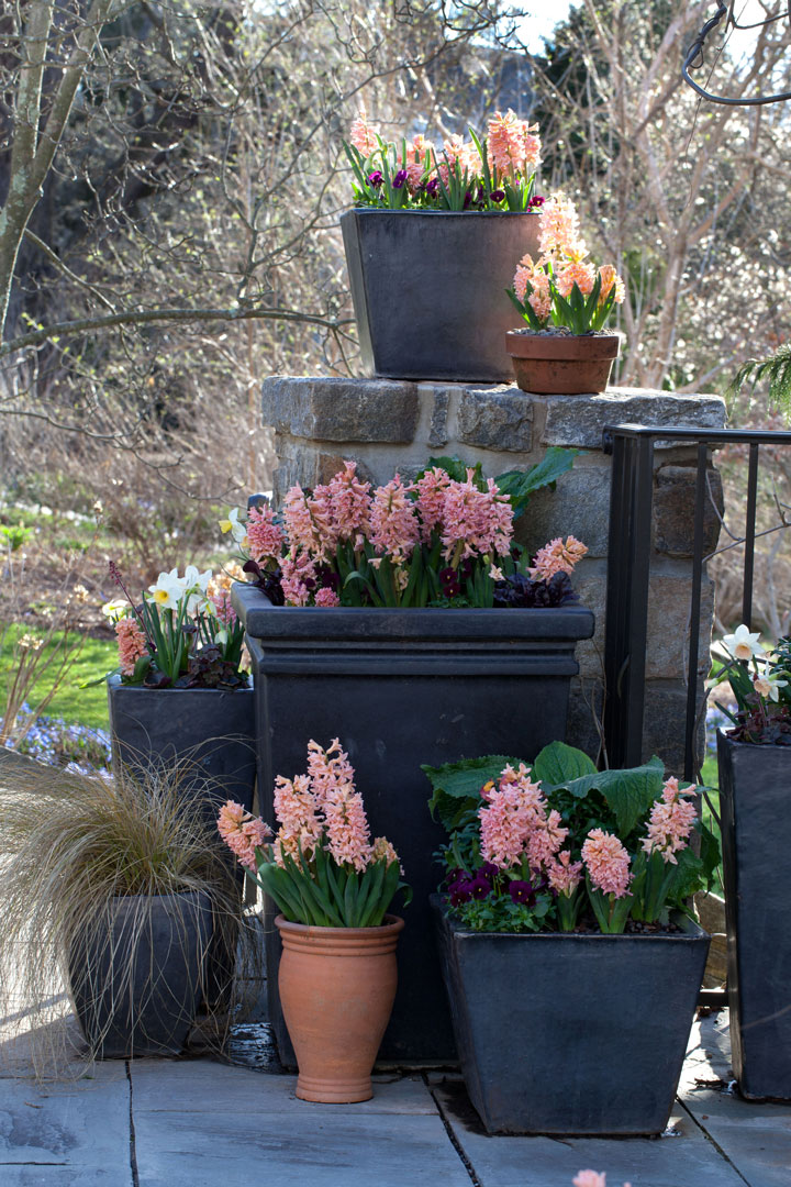 The containers at Chanticleer are inspiring, as well. These hyacinths flank the entryway into the garden.