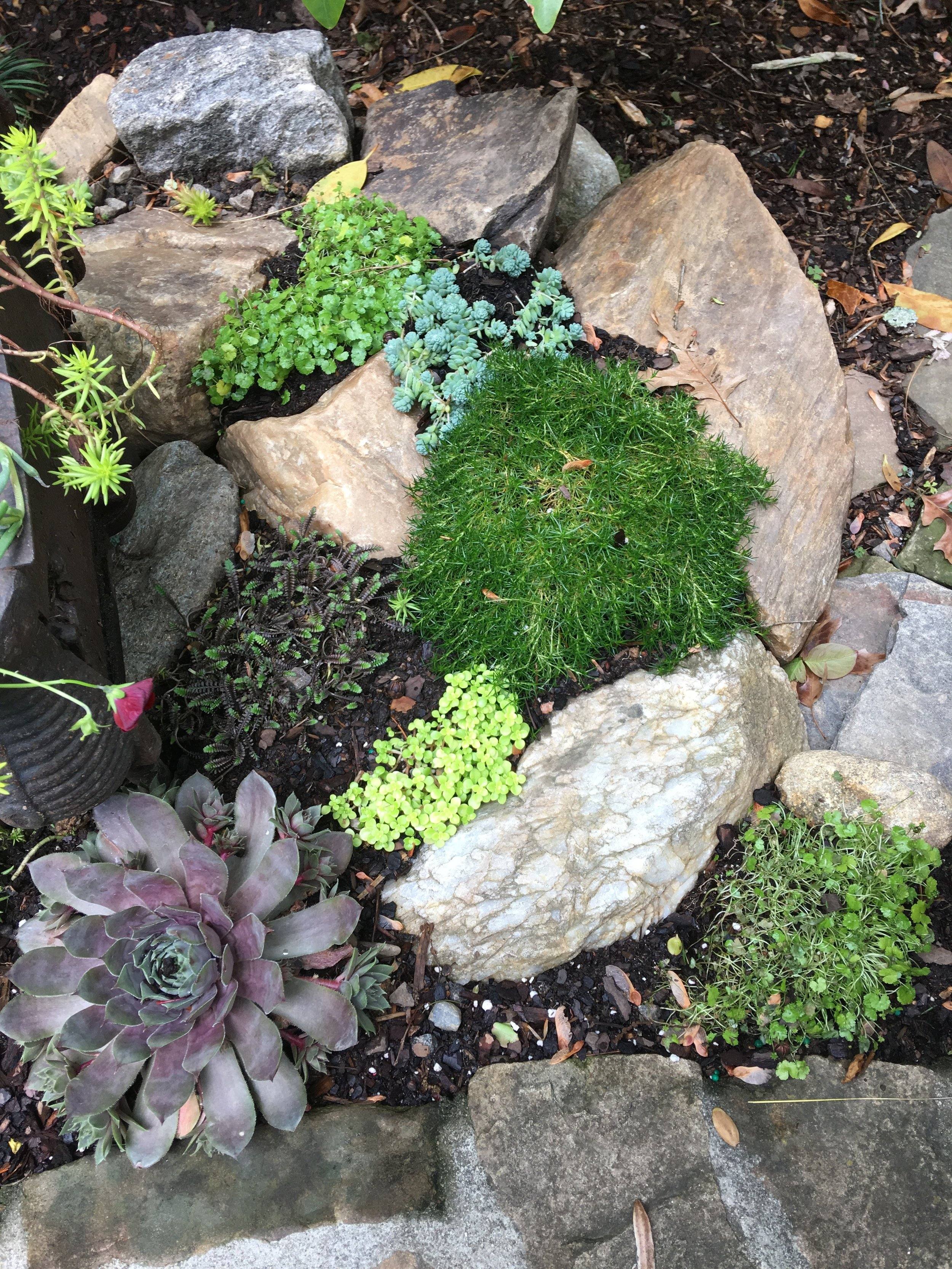 Mosses, hens and chicks, ferns and succulents surrounding the log grate