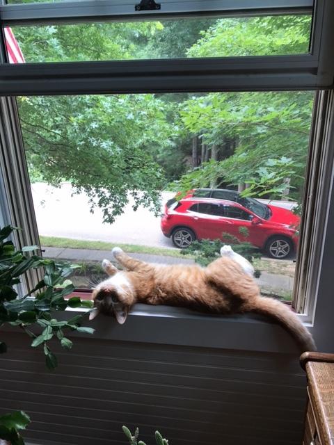 Piper, the cat, enjoying a summer breeze overlooking the garden
