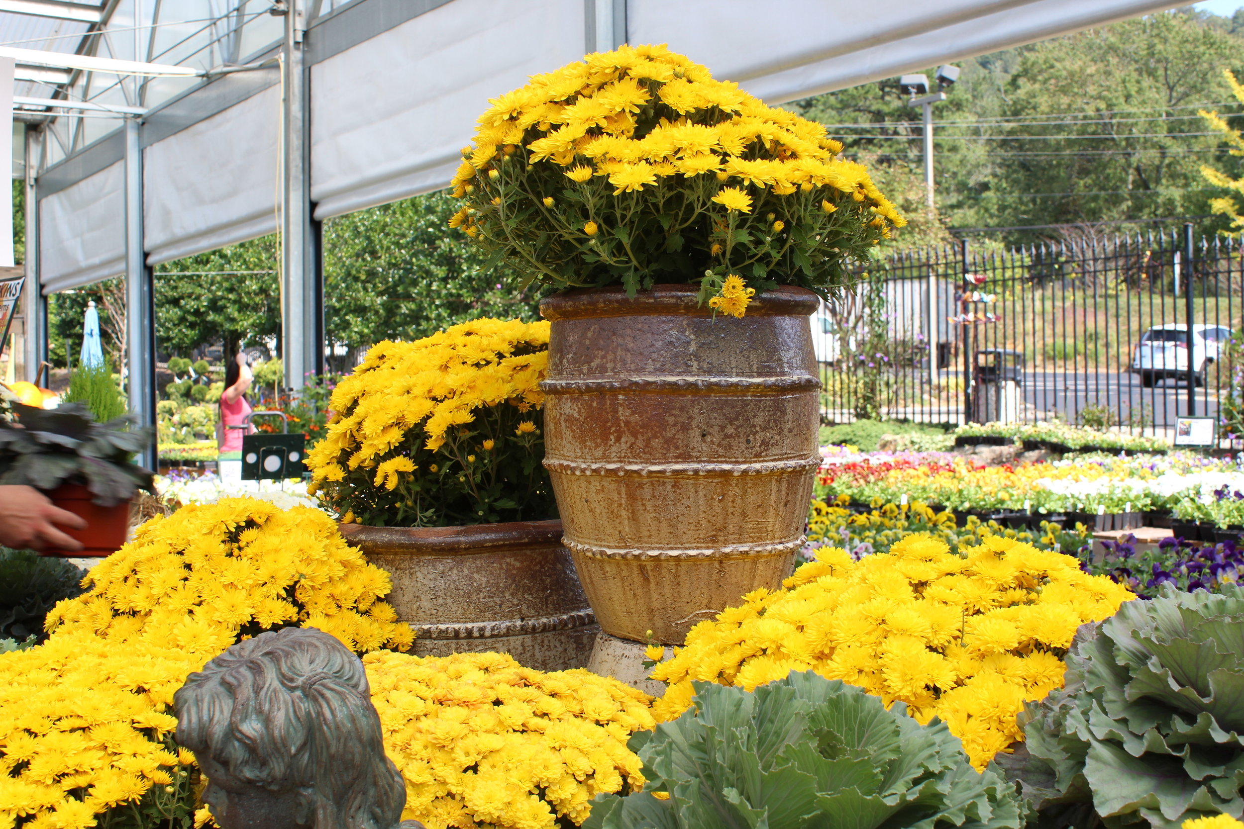 Glazed ceramic pots like this one can stay out all winter. Once these mums are gone, a winter container garden can be planted. Just remember that your winter containers need watering, too. Root drench them at least once a week.