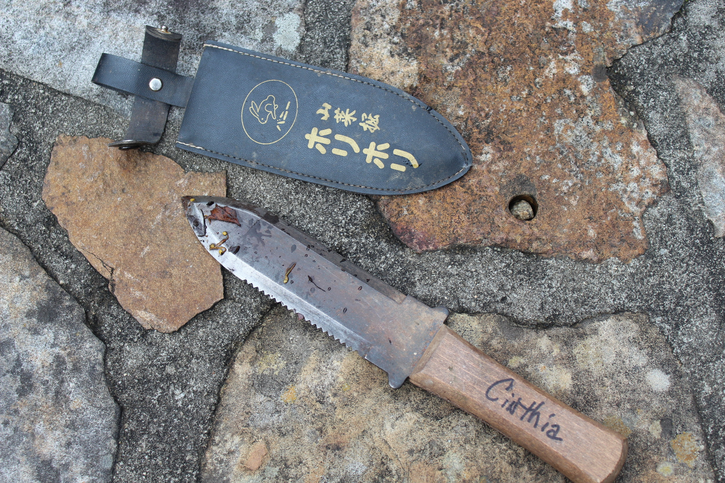 Hori-Hori knife means to dig in Japanese. A simple knife,  but the most versatile tool in the garden shed,