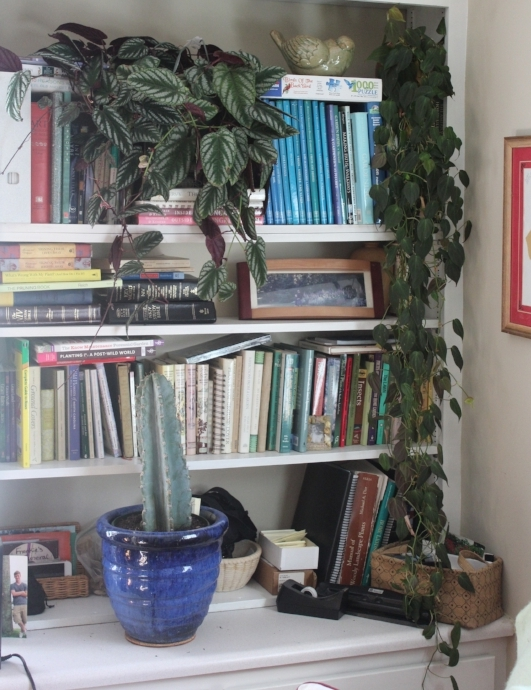 A bookshelf is a perfect place for vine or trailing plants. Just be sure never to water there, always remove to the kitchen or bathroom for watering and allow to drain overnight before putting it back. And, keep corkboard under the plant.