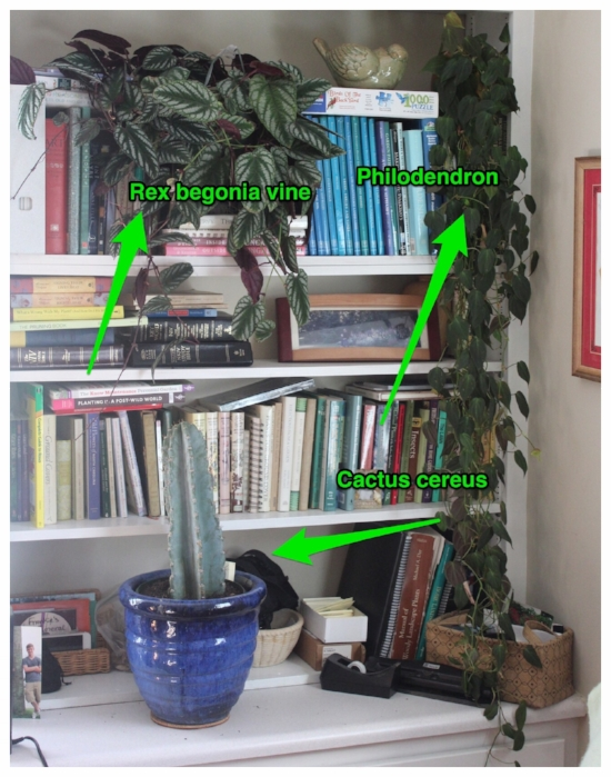 designing with houseplants
