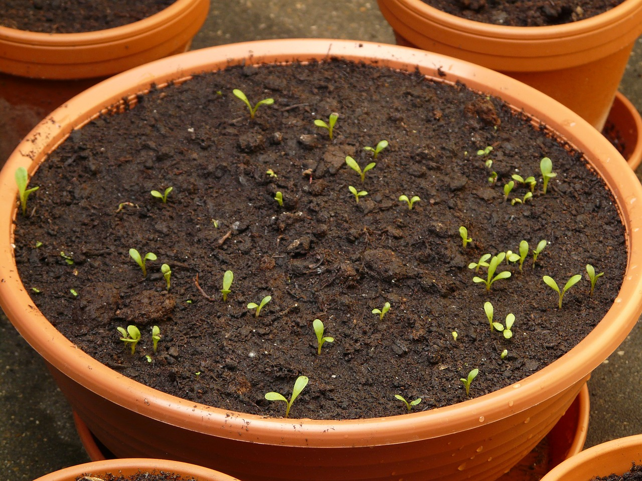 You don't have to have a fancy set-up. Seedlings can be started in any containers with a good potting mix and the right amount of light.