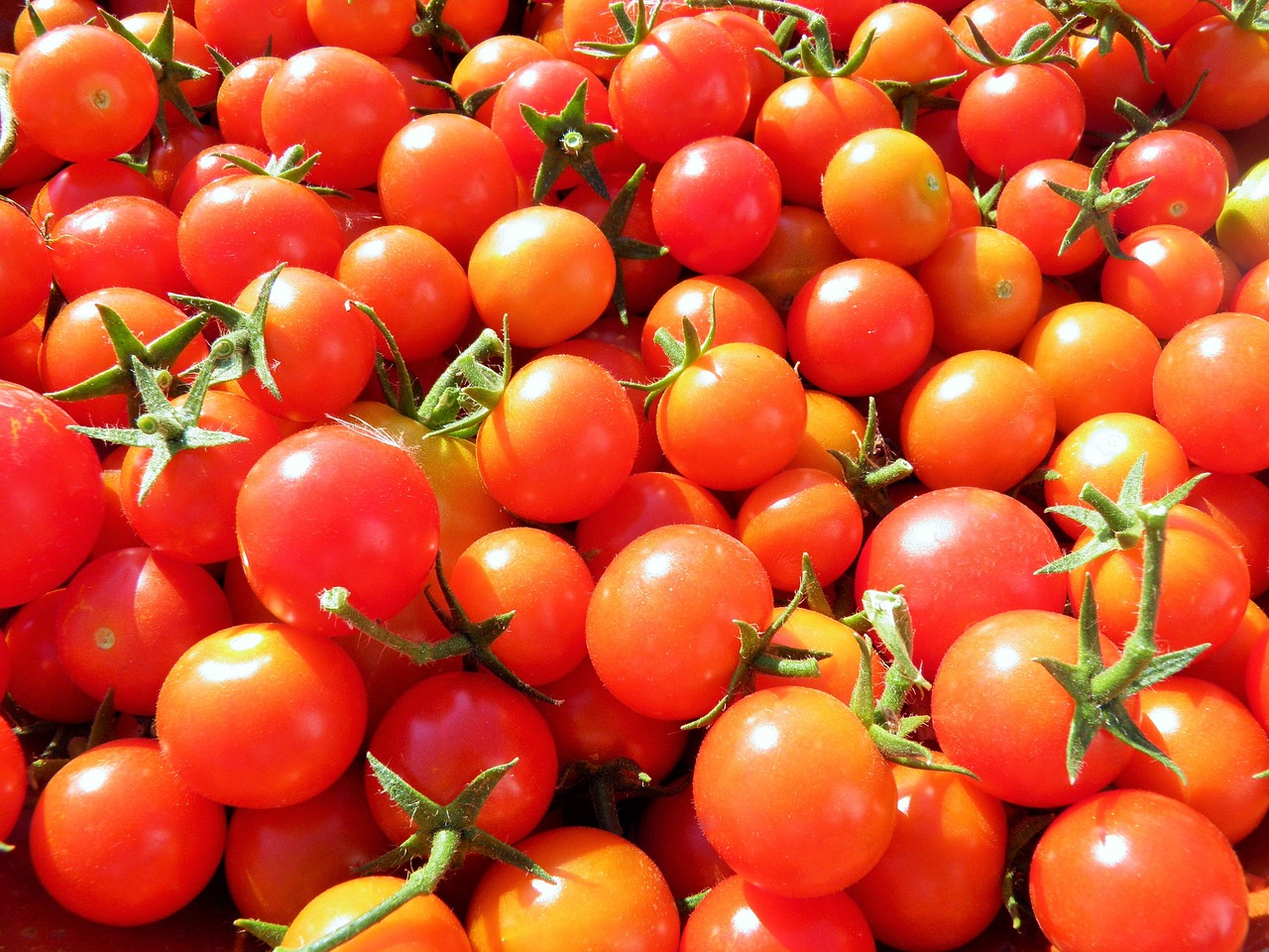 You only need one packet of cherry tomato seeds. The harvest is plentiful.