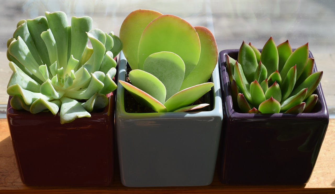 Succluents are fun to grow indoors, but you will need a bright window, and water monthly instead of weekly.