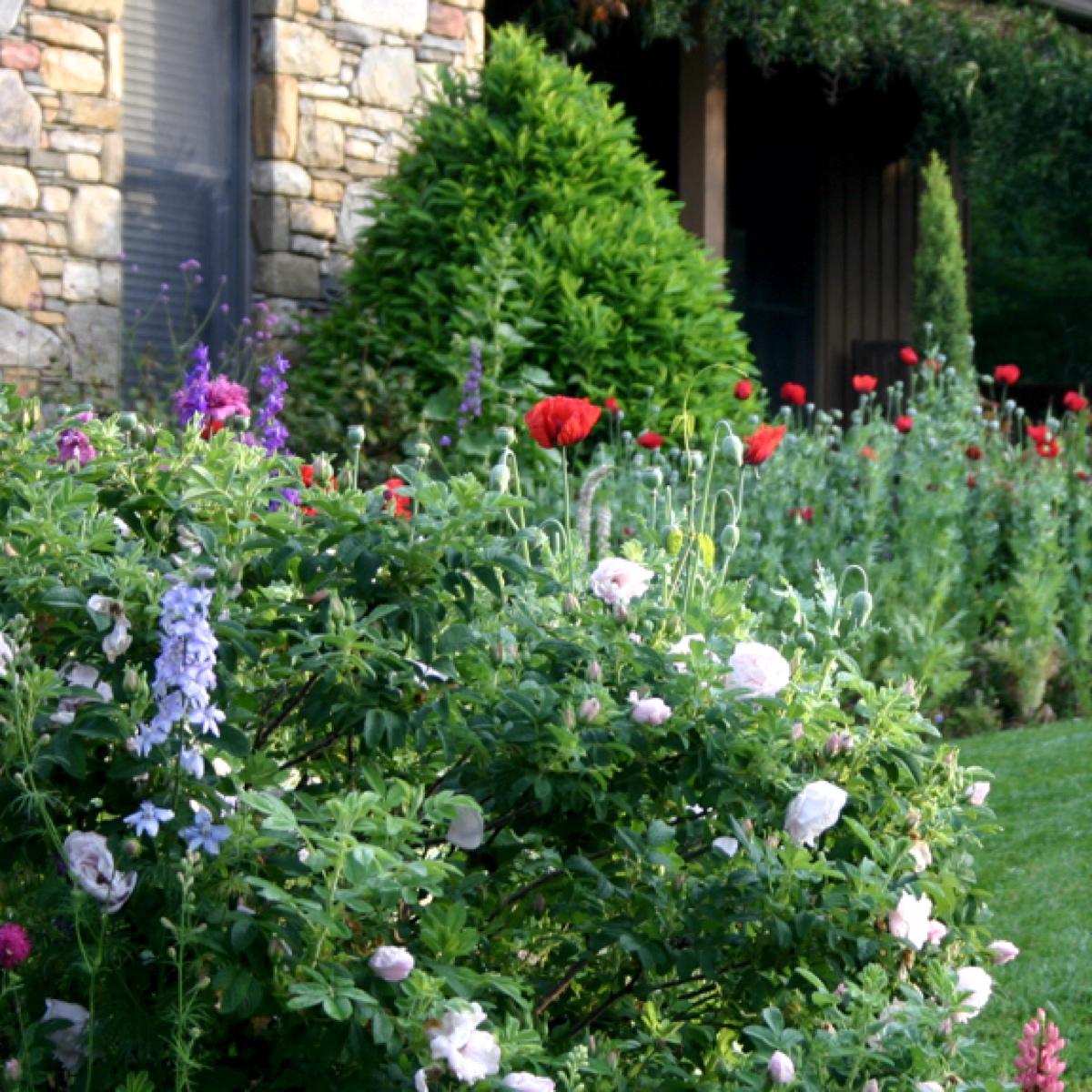 Perennial & Foundation Plantiings