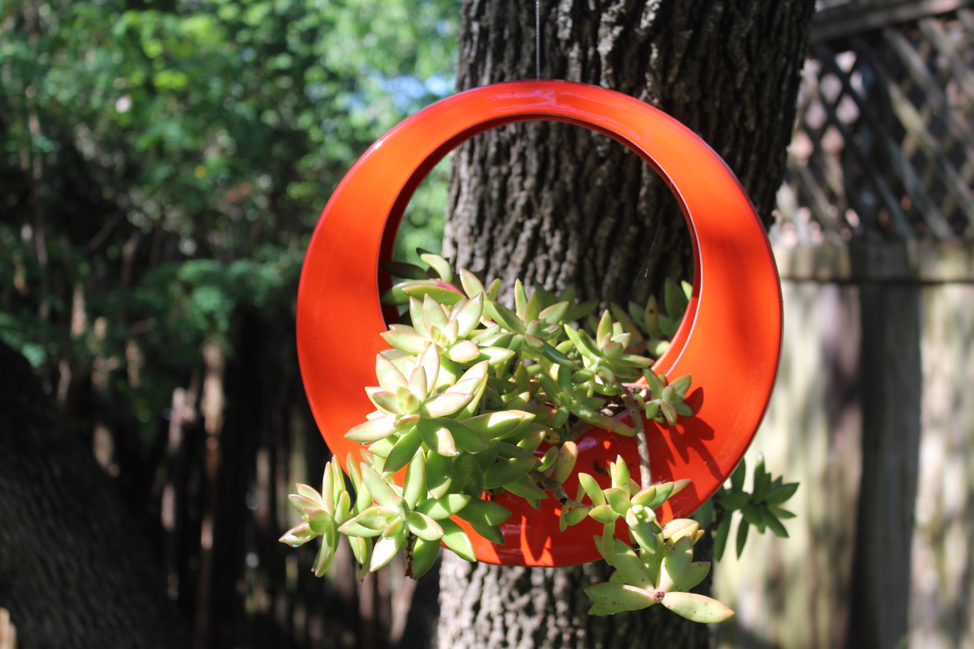 Hanging orange container