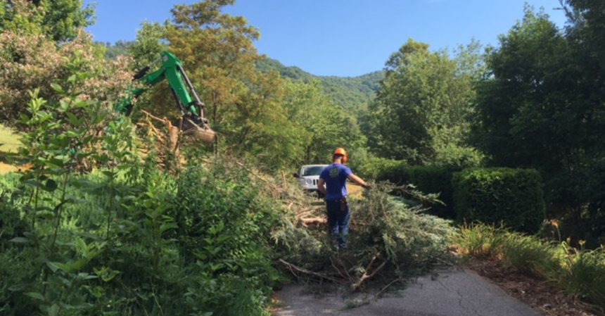 Removing old shrubs and junipers (and cleaning up a bank covered in euonmyus and poison ivy) is a job for a B.B. Barn's Landscape crew.