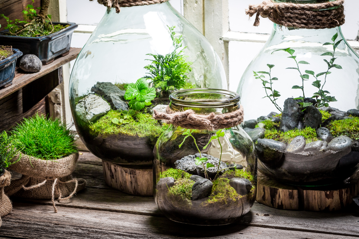 Terrariums make beautiful table scapes for holidays too. Check out the terrarium supplies in the store for a fun November project.