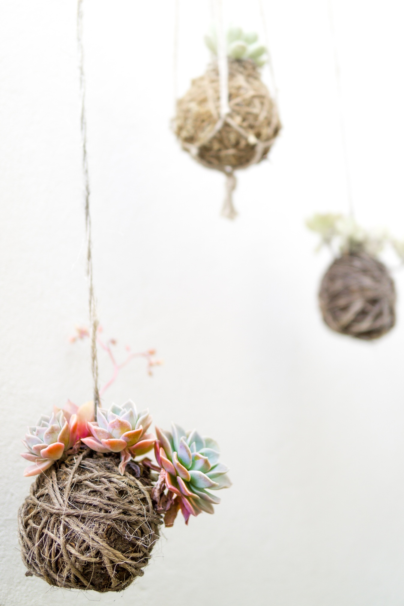 It doesn't have to be moss. These succulents are wrapped in soil and grapevine.