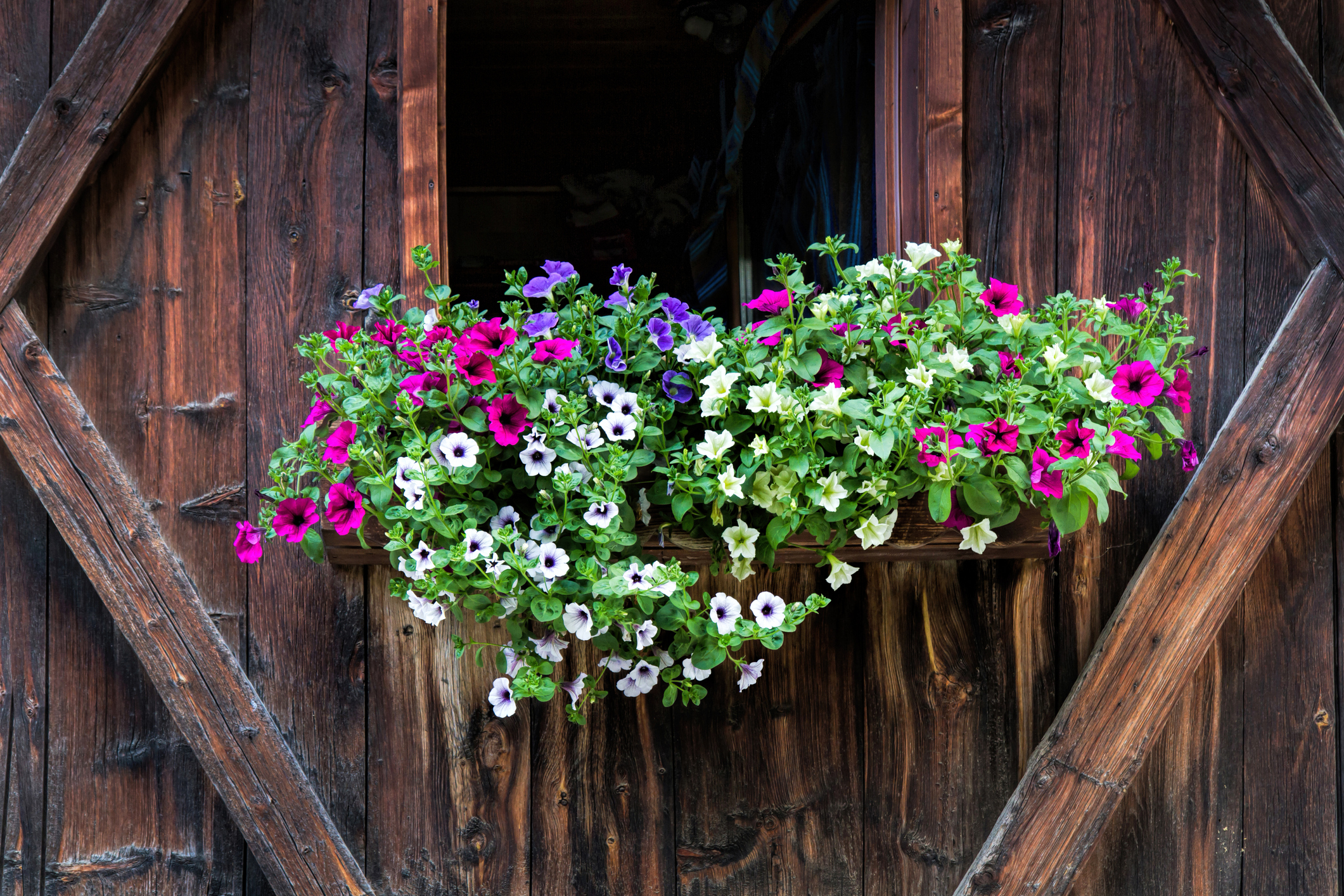Adding a bright spot of petunias fits anywhere.