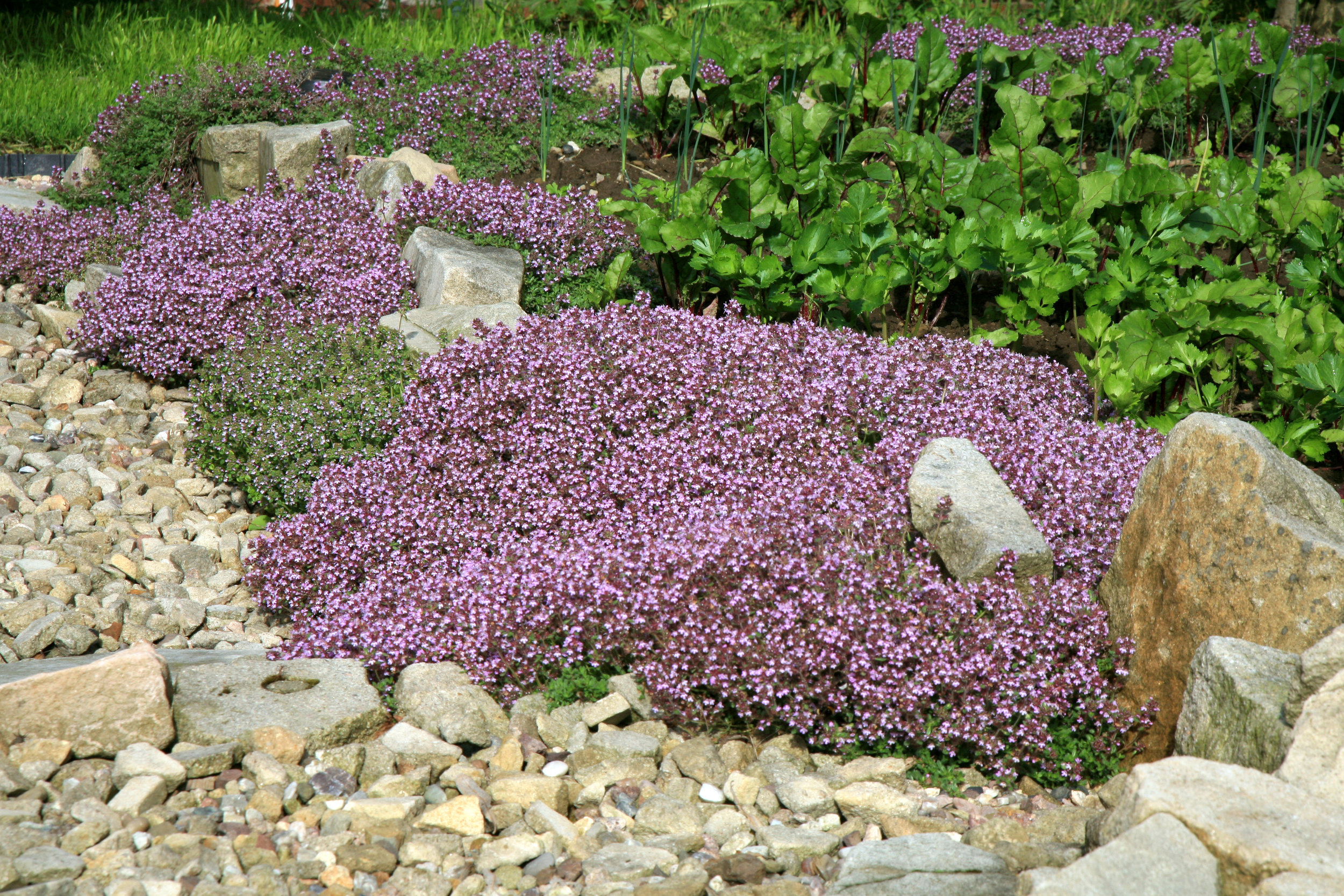 Groundcovers for Sun and Shade