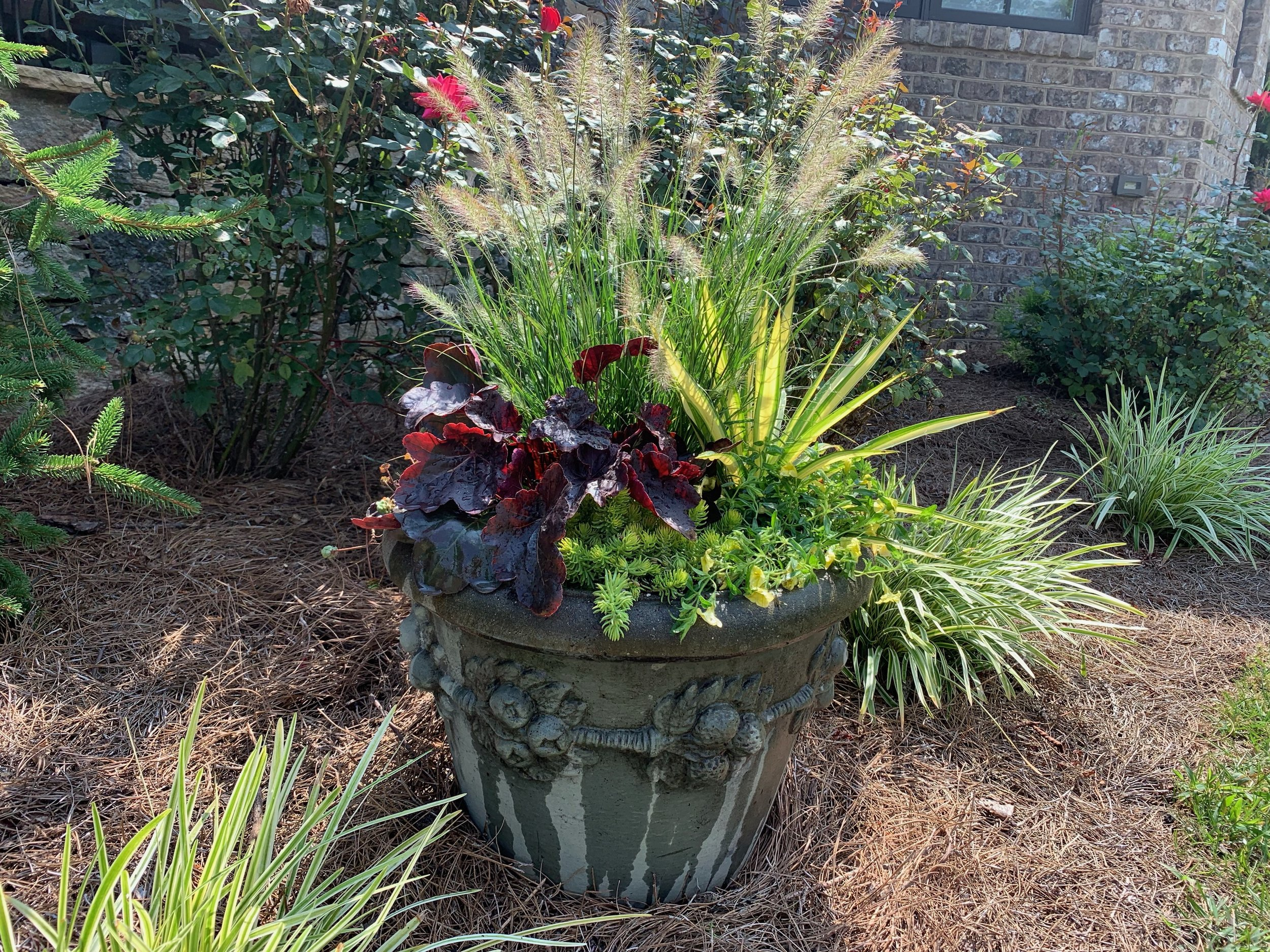 Grasses, yucca, sedum, carex and heucheras will carry this pot through the winter. Adding berries and curly willow turns it into a beautiful holiday container. Design and picture by Brenna Henley.
