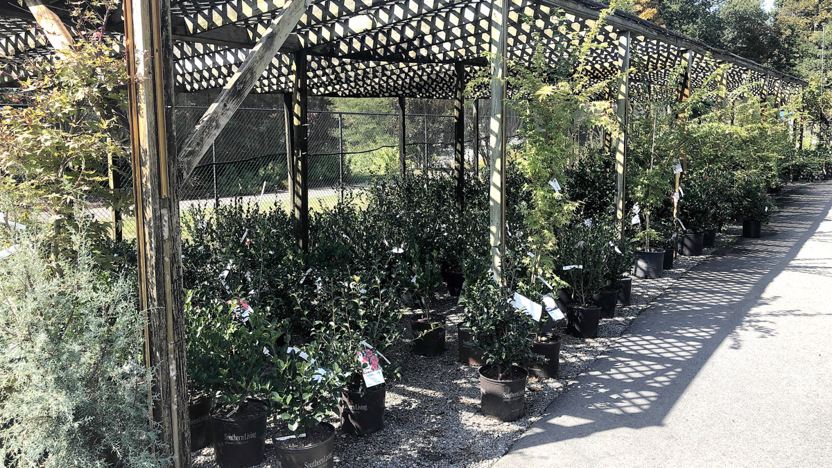camellias_long.jpg