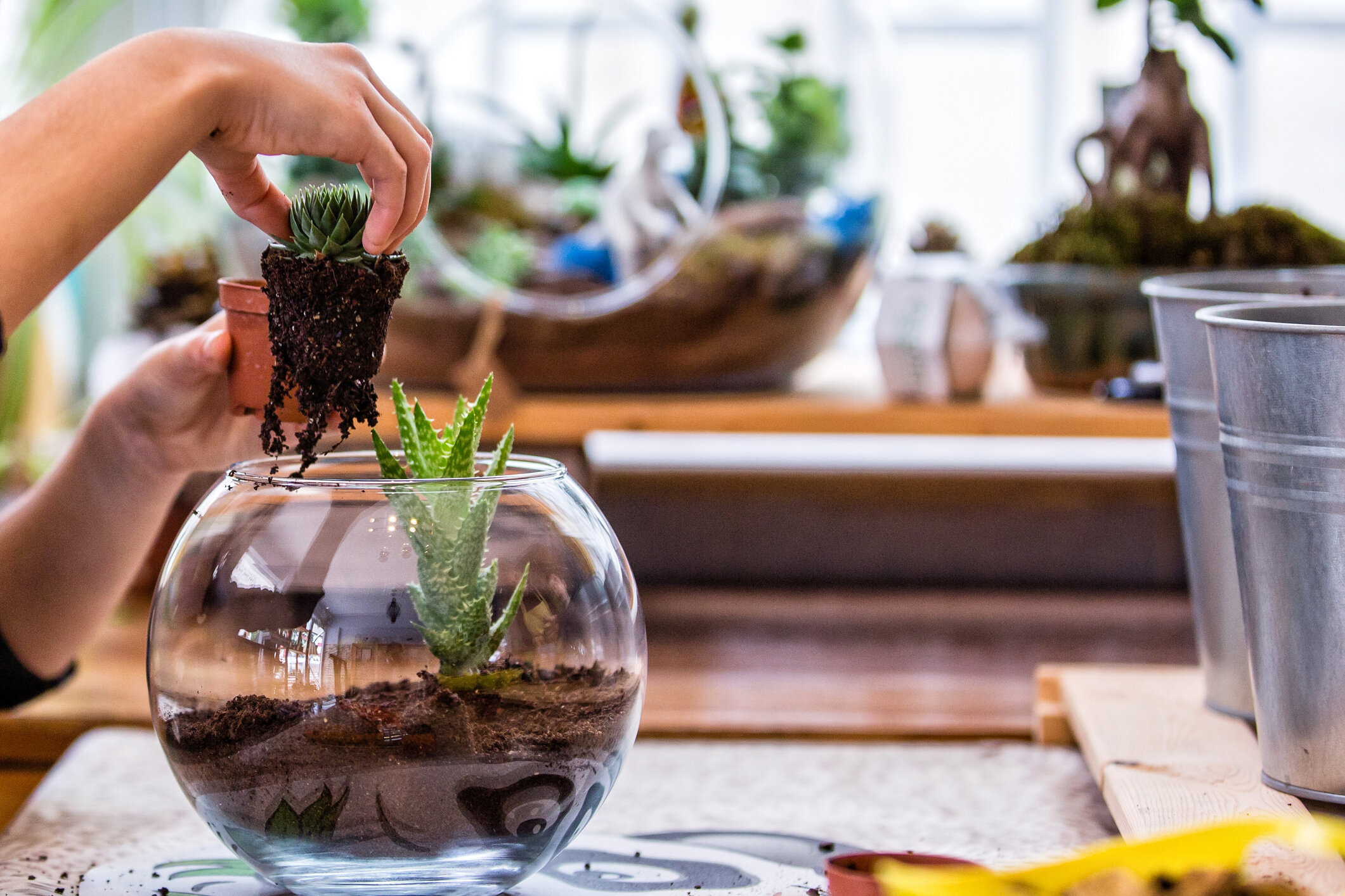 Open air terrariums are best for succulents and one of the easiest (and fun) terrariums to make.