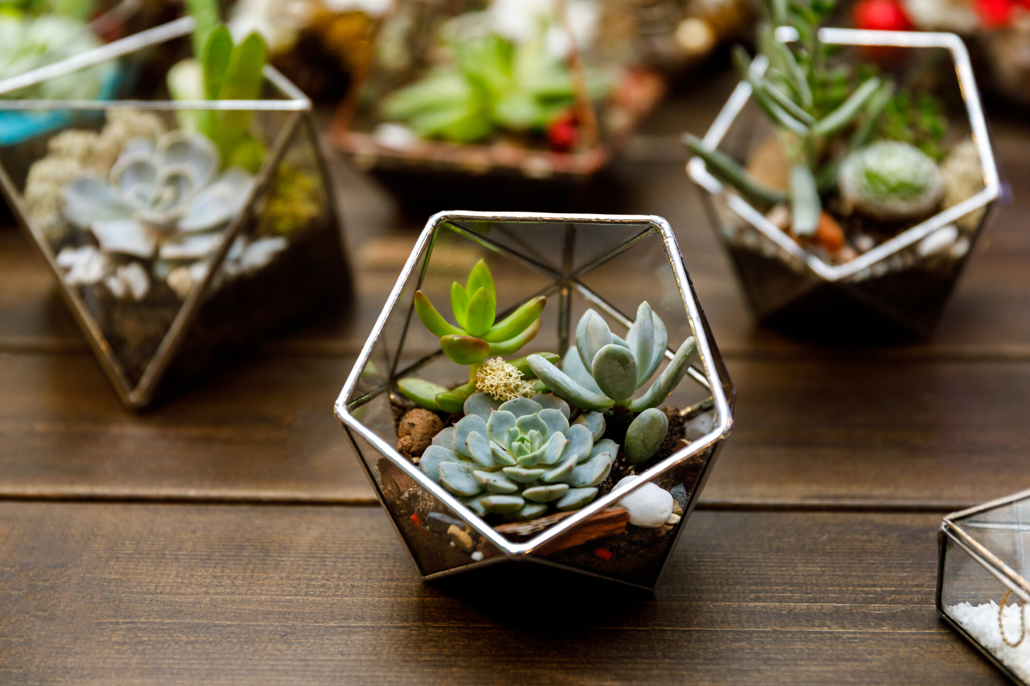 Terrariums can be any size. Small for office spaces, like these succulent ones that require little care. Great Secret Santa gifts.