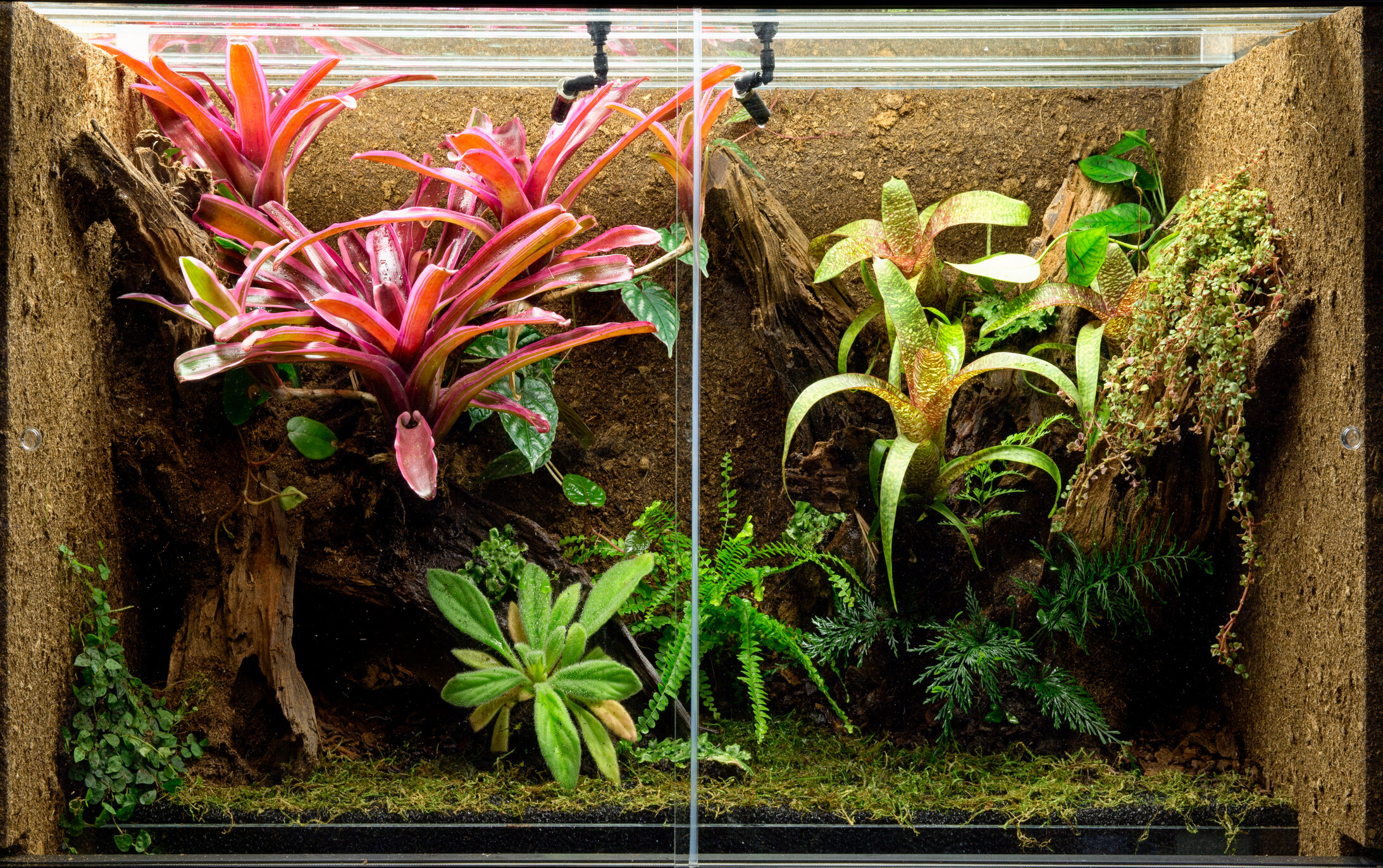 This enclosed terrarium is a self-sustaining environment. It should not need watering, but if you see condensation build up on the glass, it's time to open the roof and allow it to air out, drying out a bit.