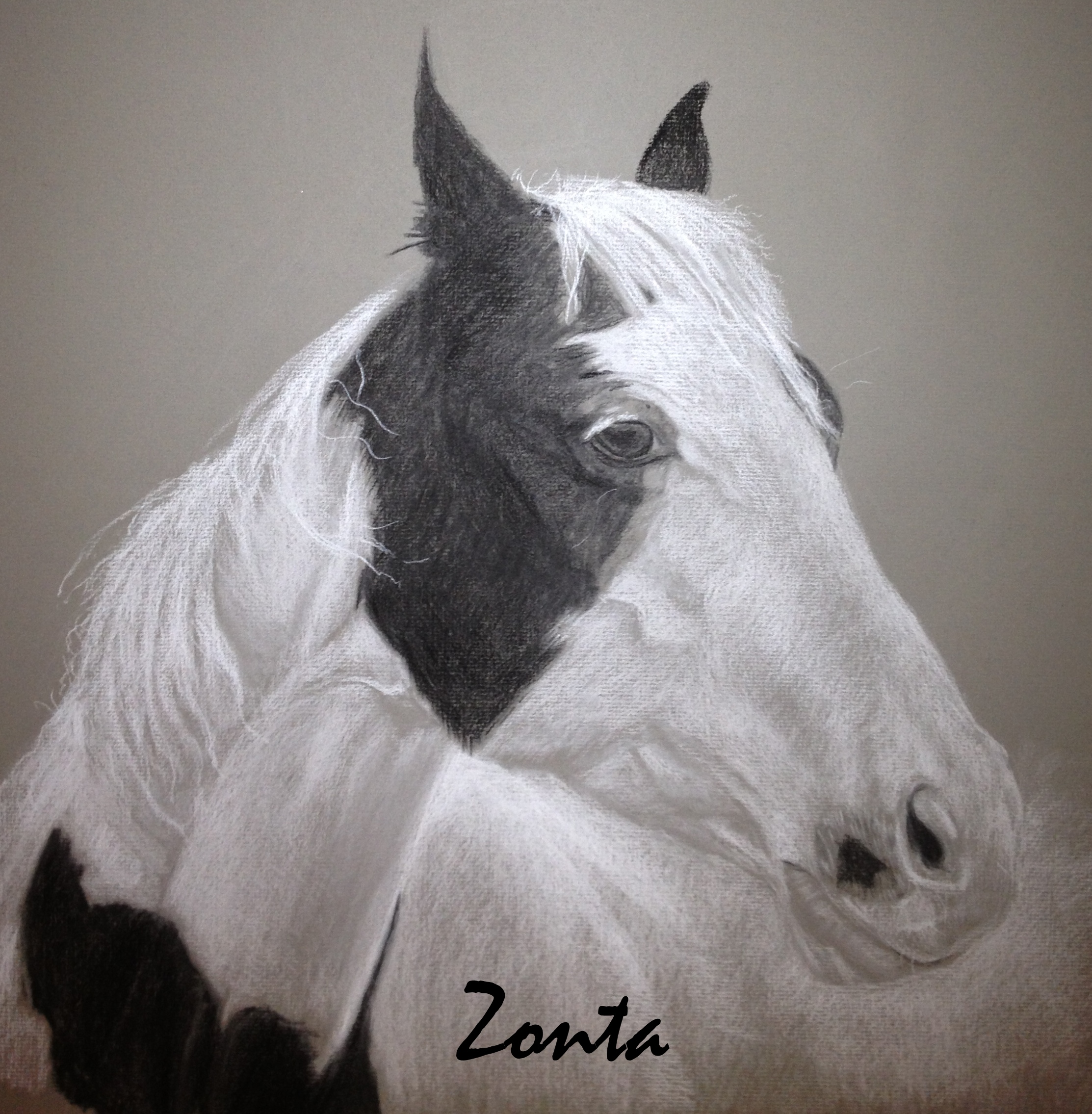 zonta-with-writing.jpg