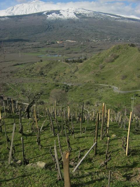 Monte Colla vineyard