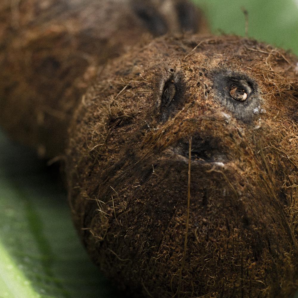 Usar el aceite como bronceador hace que la piel quede con un tono aparecido al  epicarpio  del coco.