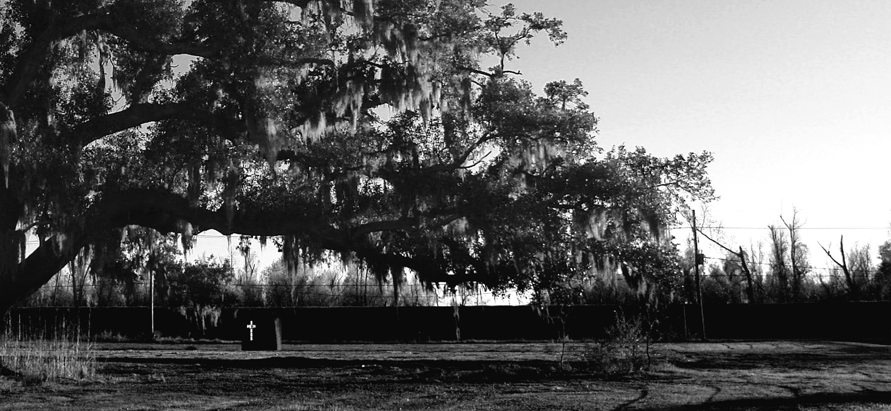 Moses-Mitchell---BIG_OLD_TREE.jpg