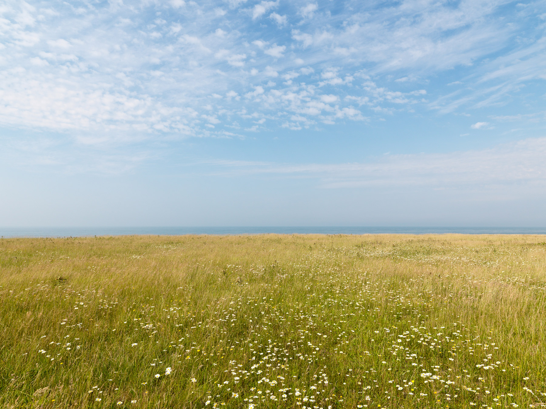 Early-Summer-Field-at-South-Pasture-A2231.jpg