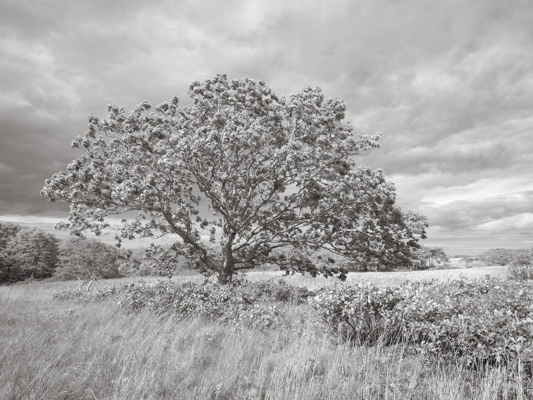 White-Oak-at-Norwood-Farm-A9997.jpg