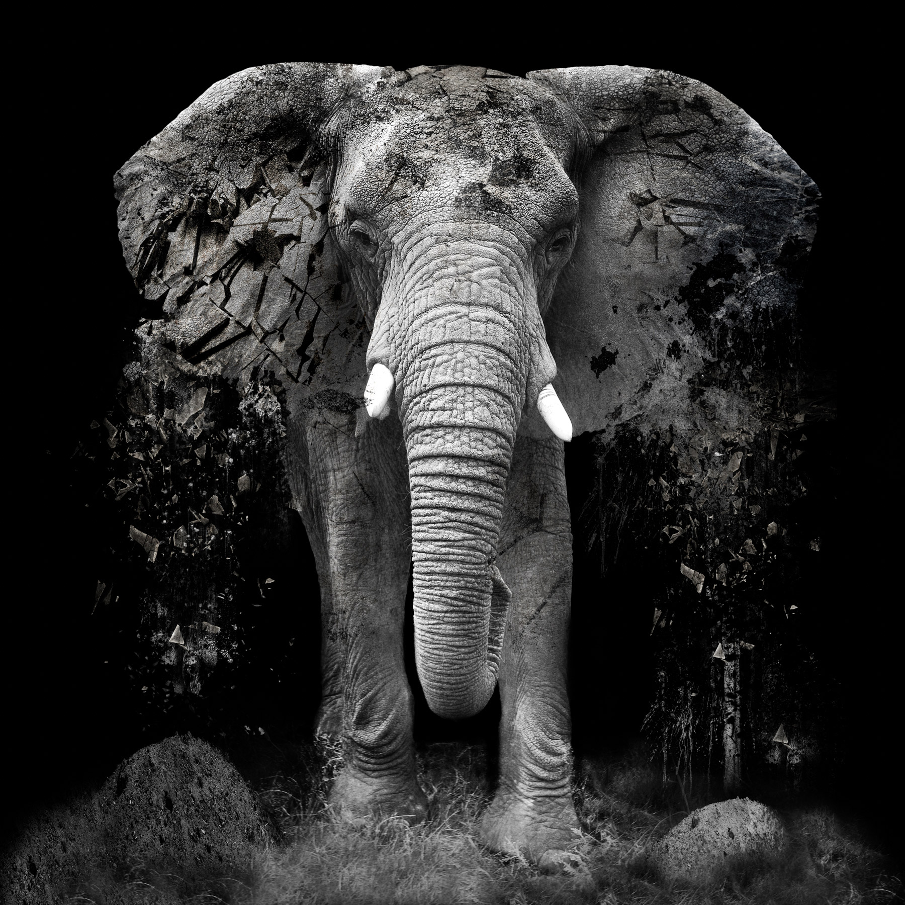 Erik Brede-Erik-Brede---The-Disappearance-of-the-Elephant.jpg