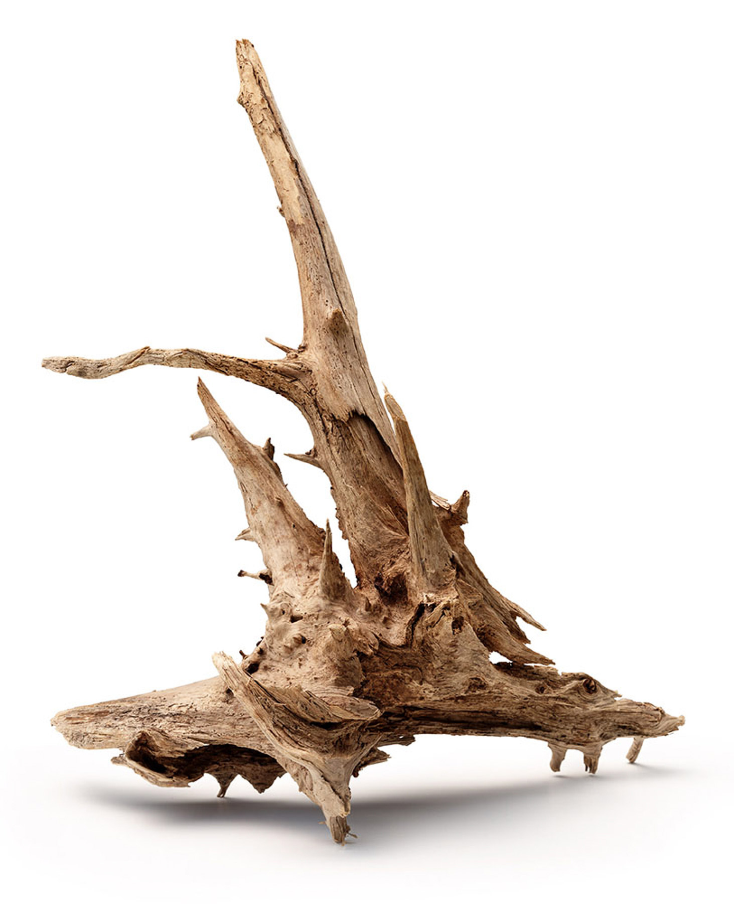 Fred Collins-Driftwood-4.jpg