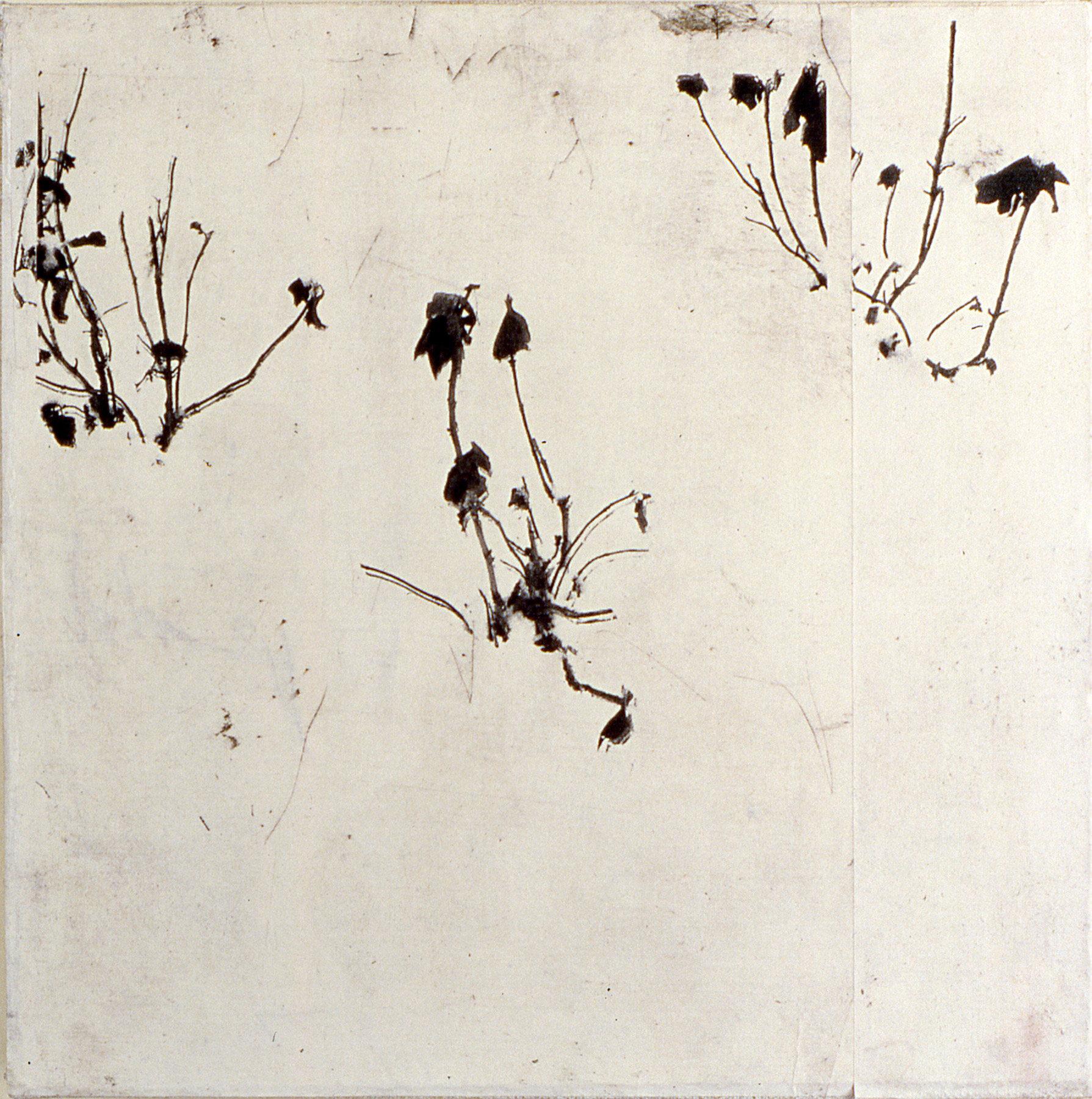 gary-weidner---flowers-2.jpg