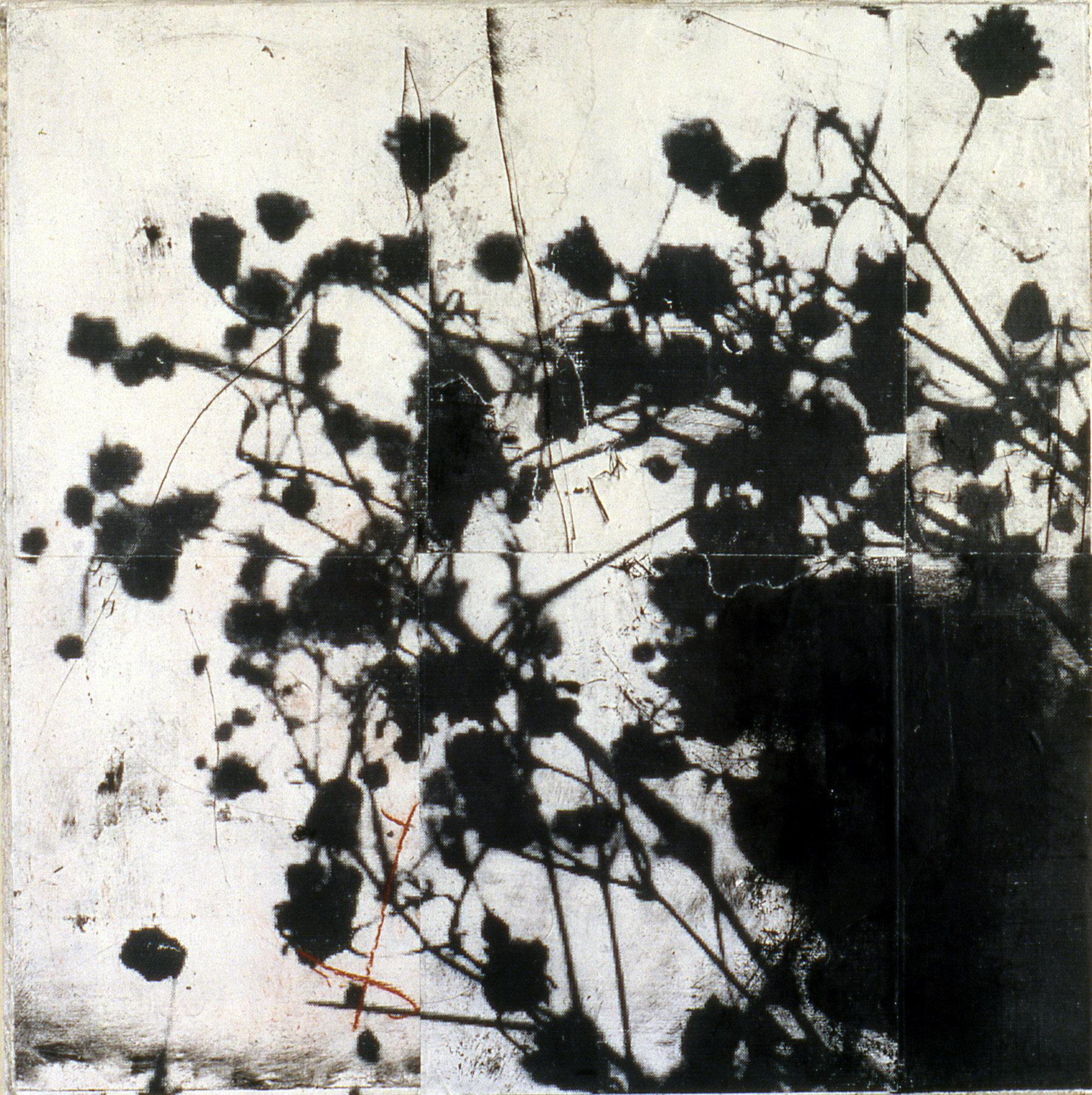 gary-weidner---flowers-3.jpg