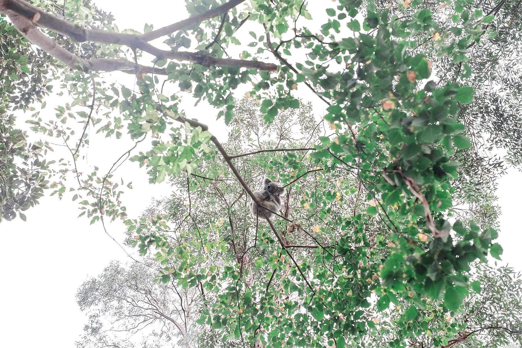 featherdale-wildlife-park-australia_0145.jpg